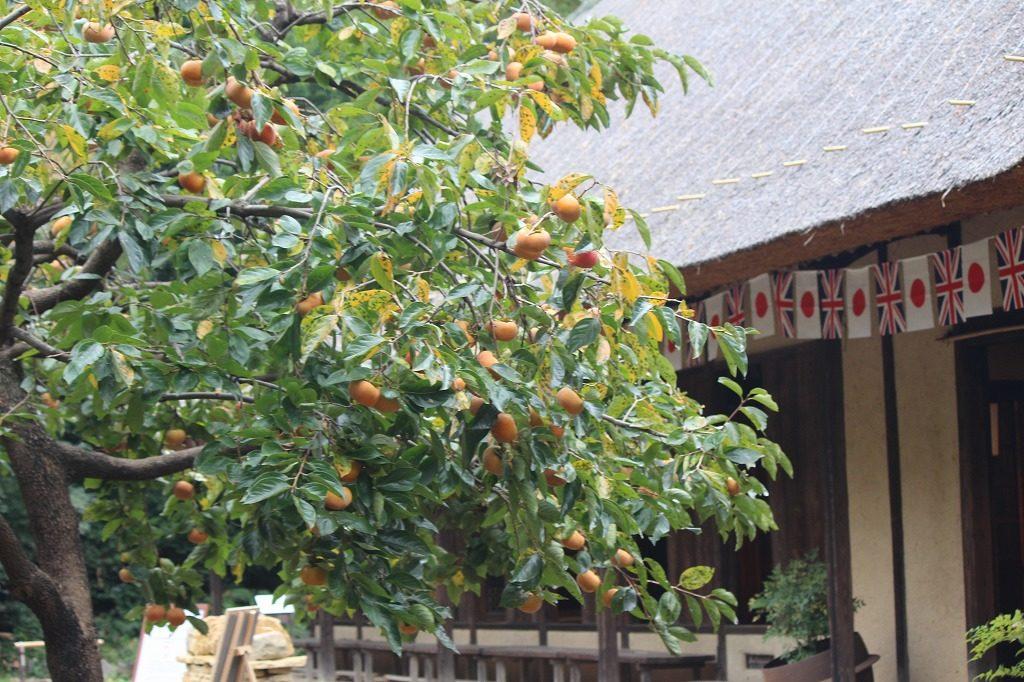 都筑民家園の柿